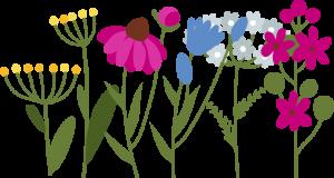 Blühwiese